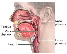 What region of the pharynx is closest to the larynx?