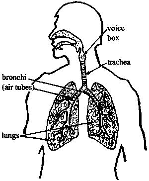 My chest hurts, I have a bad cough, back pain, it hurts to cough, eating makes me sick, and I have mucus. What do I have wrong? Its been there days.
