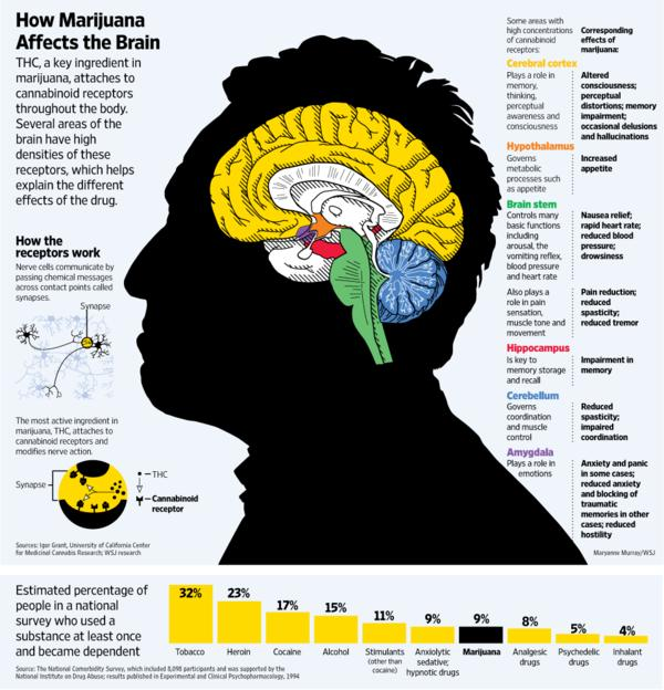 What effects does marijuana have on the brain/body?