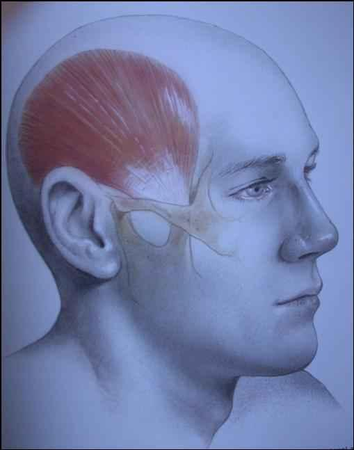 What is the causes of twitching in the head on top and side