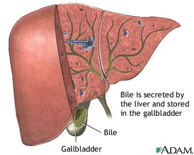 What causes green bile?