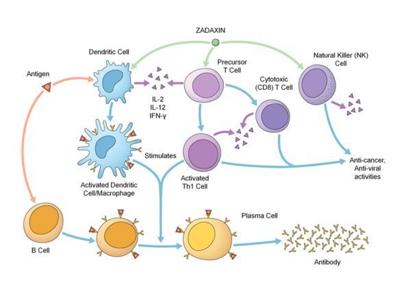 How  thymosin alpha 1 affects on cancer treatment?