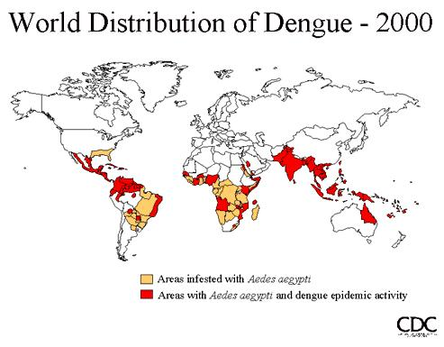 What are the satges of dengue?