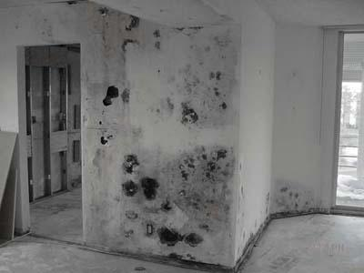 Can black mold cause mental problems like depression?