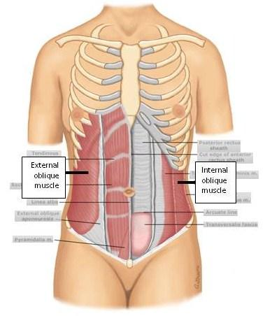 Discomfort On Left Side Of Stomach Below Rib Cage - Doctor ...