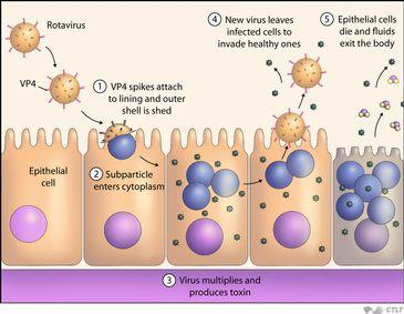 I have cancer, can a rotavirus infection cause complications?
