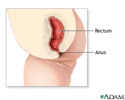 Small white protuberance from anus