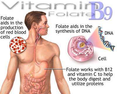 Are folic acid and vitamin b the same thing?