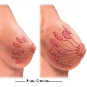 Breast Anatomy: Learn About the Structure and Blood Supply