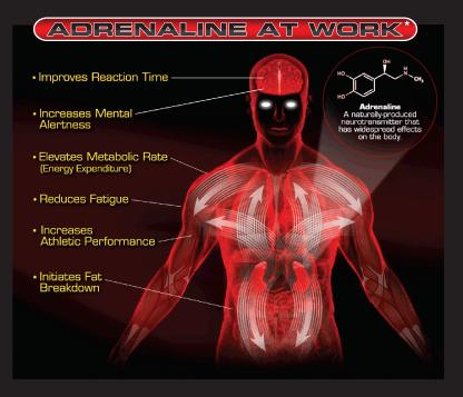 What does adrenaline do to vessels?