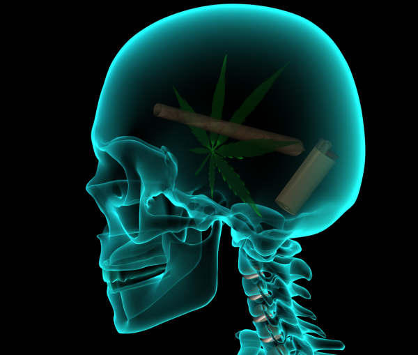 Effect of marijuana on the body and brain?