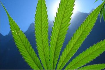 What benefit can marijuana and cocaine have for cancer patients?