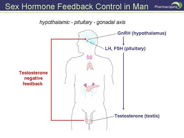 Does hyperthyroid affects man fertility? I heard some people recover from hyperthyroid will be hypothyroid, and that affects man testosterone?