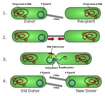 How do multiple drug resistant plasmids arise?