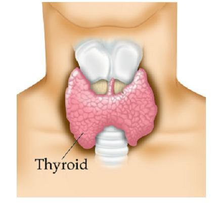 I got  high thyroid levels what can I do to get pregnant?