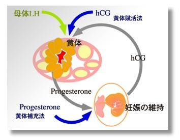 If my levels are high enough of progesterone, will taking progesterone pills harm me? Is there a such thing at too much