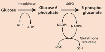 Is there a level of g6pd deficiency? If yes, how to measure the risk of deficient?