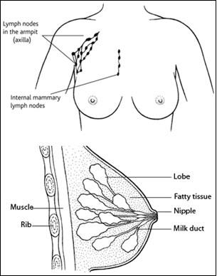 Pain In The Breast And Underarm - Doctor answers on HealthTap