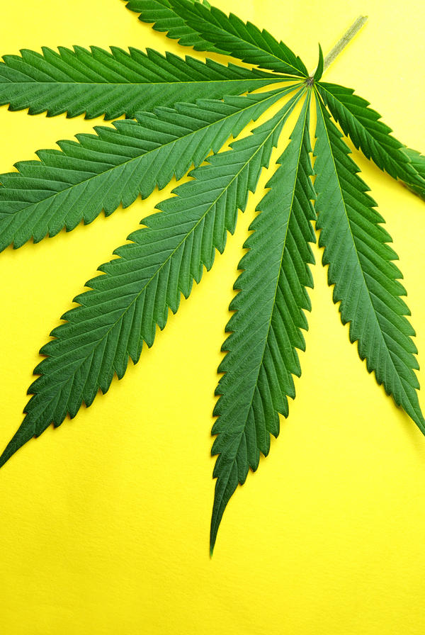 Can marijuana cause tiny strokes similar to the ones seen in patients with vasculitis?