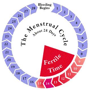 What days of intercourse would lead to a due date of march 11, regular 28 day cycle, 6/4 to 6/8?