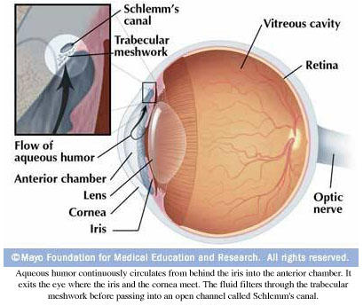 Is vitamin B2 good for glaucoma?