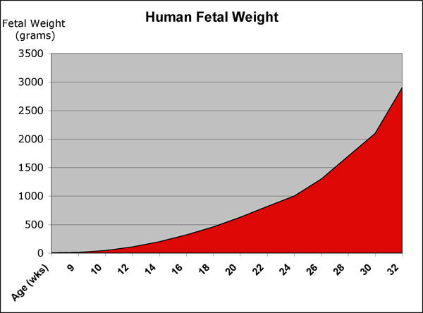 How to increase fetus weight?