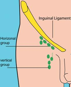 How many inguinal lymph nodes are there?