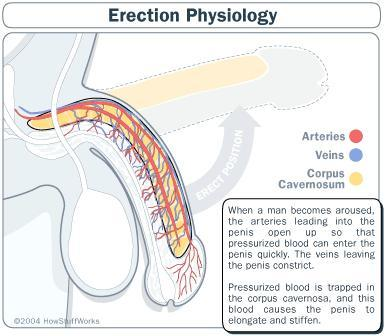 Plz tell me natural way to overcome erectil dysfunction!?