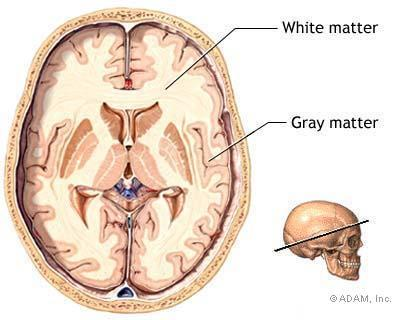 What is the white matter of the brain used for?