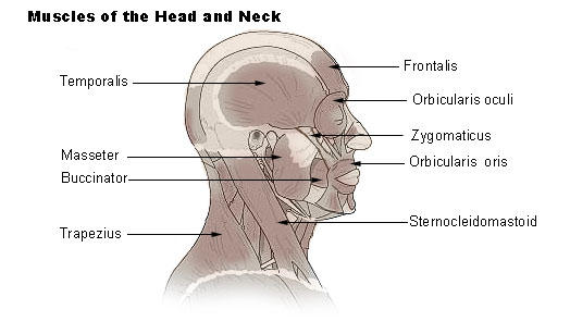 I fell form my truck & banged my head on the ground now i struggle to lift my head up & my neck muscles are protruding?