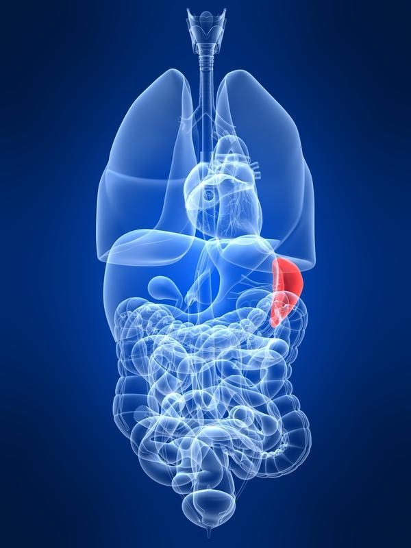 When you have have  spleenectomy can your spleen grow back to a normal spleen?