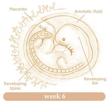 How Many Weeks Im Pregnant