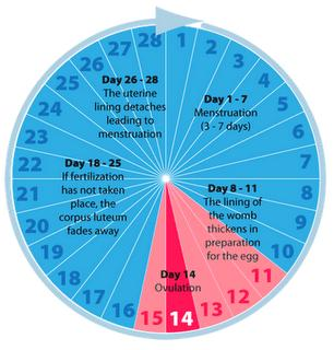Should I still take a pregnancy test if I had a normal period 3 weeks after this time where me and my boyfriend were fooling around, but no sex?