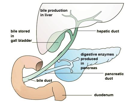 Is it necessary to take a digestive enzyme after gall bladder removal?