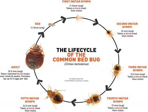 If you slept on a bed with bed bugs, can the get on your clothes?  If so, would washing them, kill them?