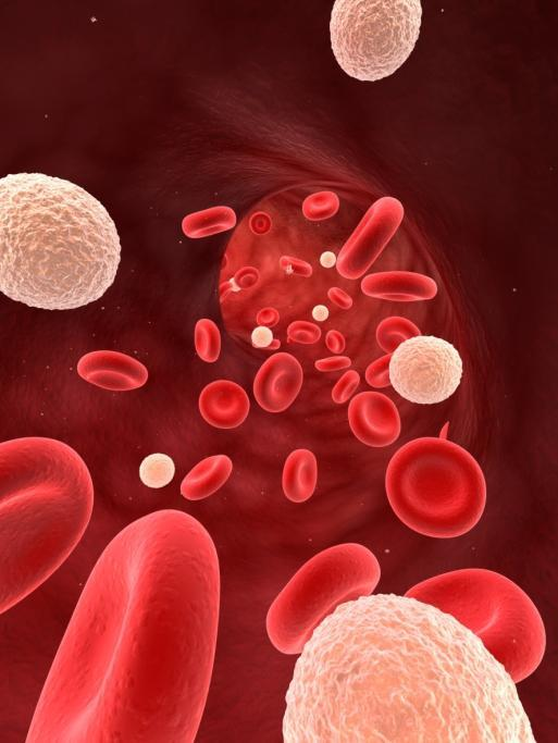 What are the causes for low white blood cell count?