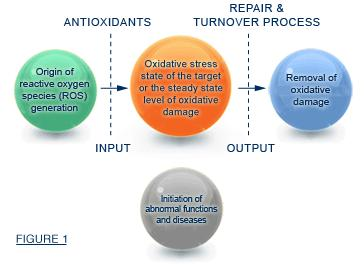 What is oxidative stress? Is it different from daily stress?
