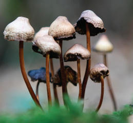 Did hallucinogens have any impact on you longterm?