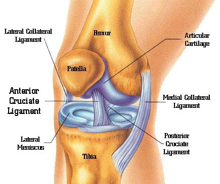 My right knee hurts when i walk sometimes and a bruise appears. I have insoles, take multivitamins and not lime disease. ?