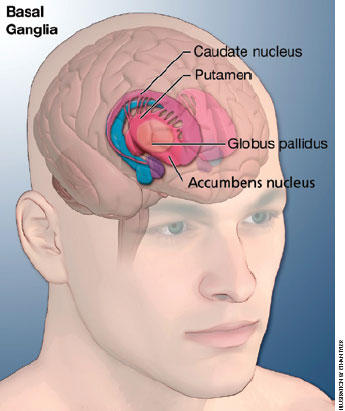 What are the symptoms of tourette syndrome?