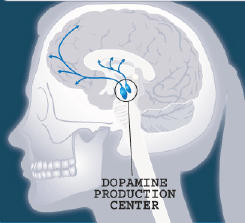 What's the most effective way to increase dopamine activity in the brain?