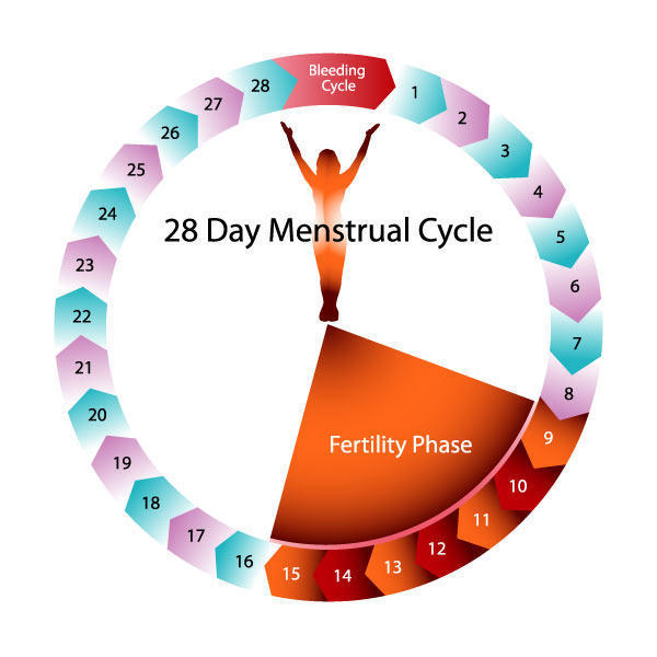 I had my periods for two weeks .I had sex after  when could i get pregnant?