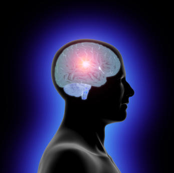 What is the effect of Accutane on brain?