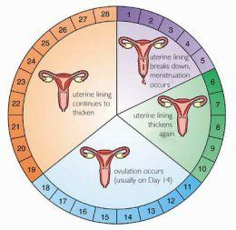 Can a women conceive 3 days after her periods?