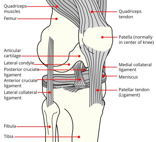 What is the best treatment for a torn acl?