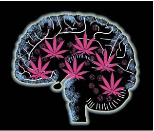 Cannabis mental disorder effect?