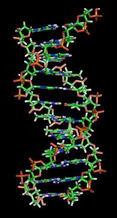 Could hemophilia occur due to a mutation?