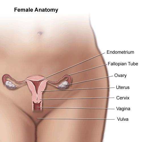 How come there isn't an artificial fallopian tube or fallopian tube transplant?
