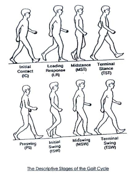 What is the definition or description of: gait?