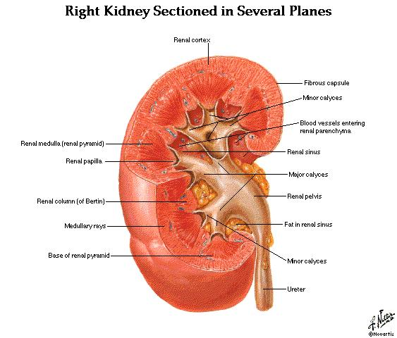 What is the definition or description of: nephrology and dialysis?